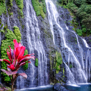 Bright red flower and water flowing down the rocks at Banyumala Waterfall in Bali