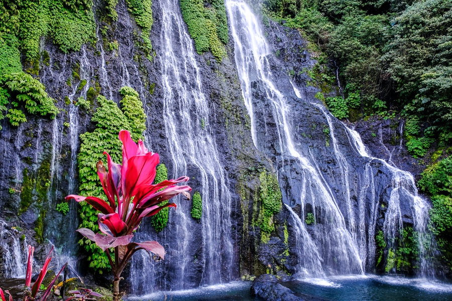 Banyumala Waterfall and red flower in Bali