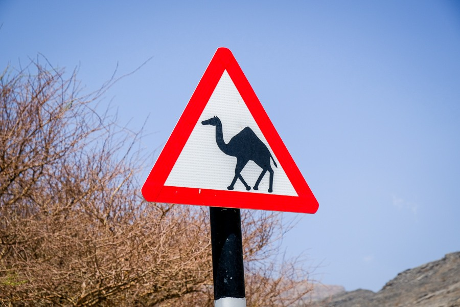 Camel crossing sign by a road in Oman