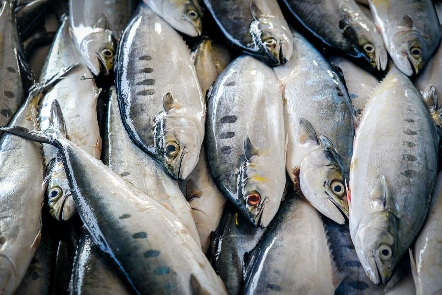 Dead fish for sale at the Nakhl-Barka fish market in Rustaq, Oman