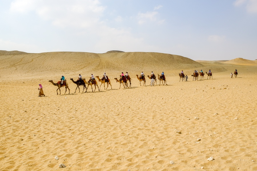 Line of camels walking in the sand at the Great Pyramids of Giza in Egypt