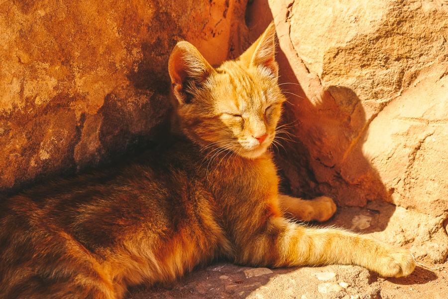 Pet cat at Petra, Jordan
