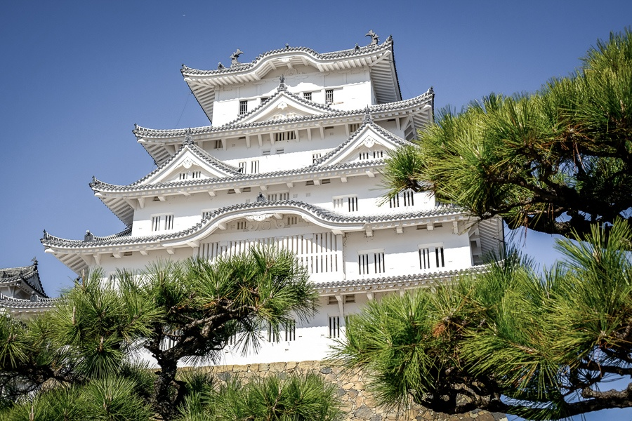 Viewing Himeji Castle in Japan through the pine trees