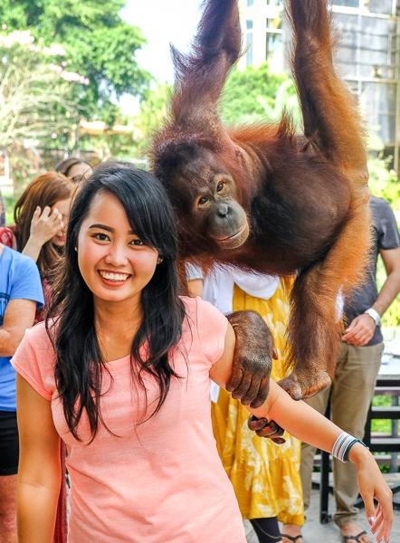 Orangutan playing with my woman at the Bali Zoo