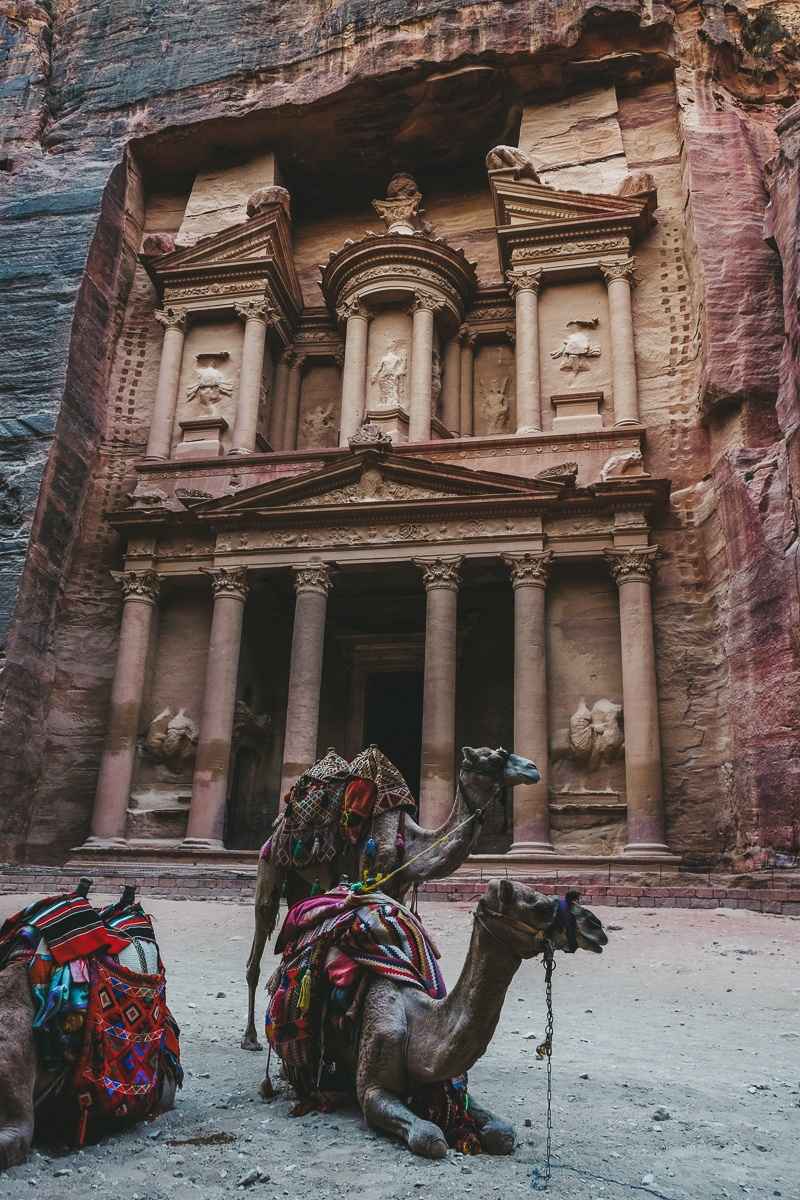 Camels posing in front of the treasury in Petra, Jordan