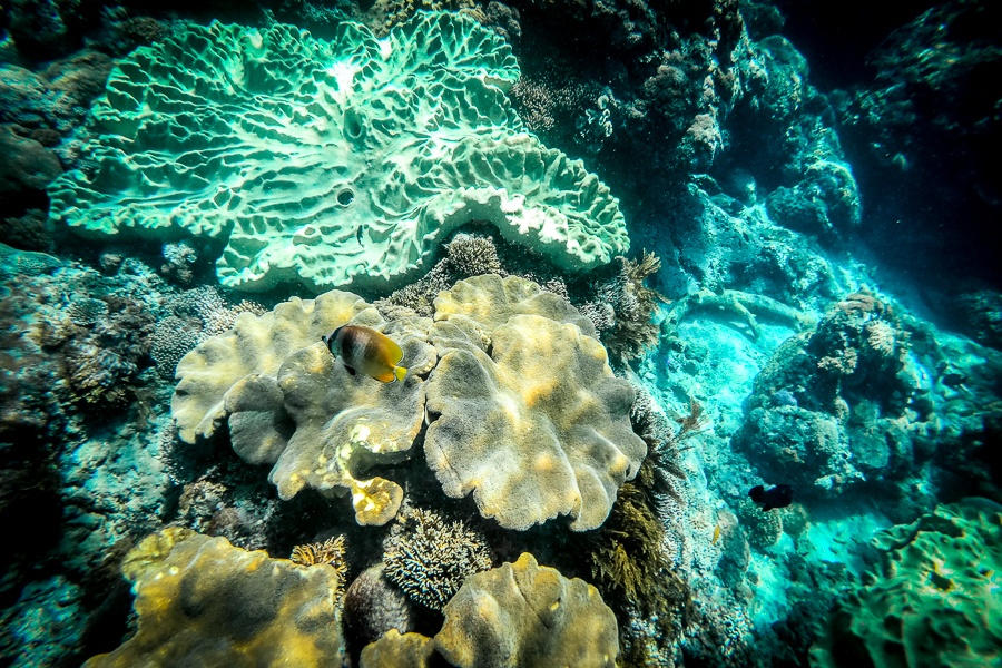 Snorkeling with coral and fish in Nusa Penida, Bali