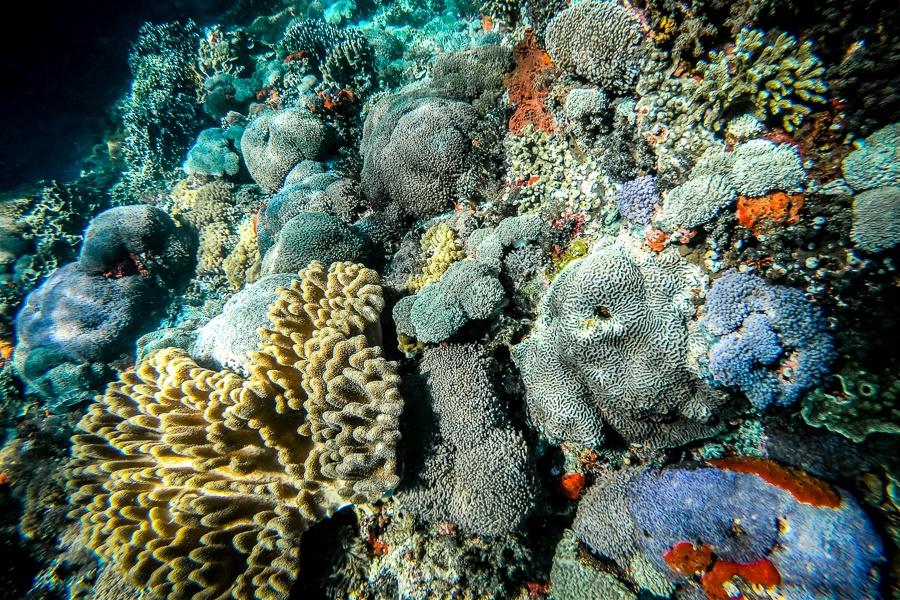 Exotic corals underwater at Nusa Penida, Bali
