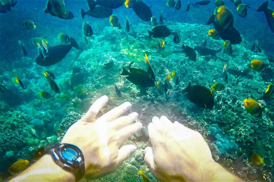 Swimming with fish underwater near Nusa Penida, Bali