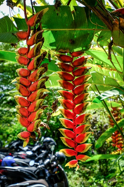 Exotic plants at Nungnung Waterfall in Bali