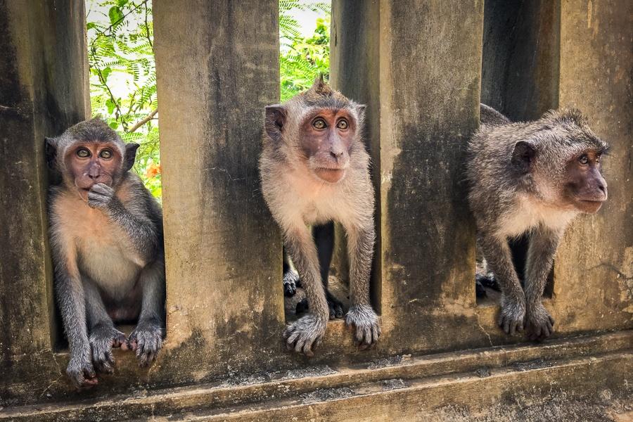 Monkeys at Uluwatu Temple in Bali