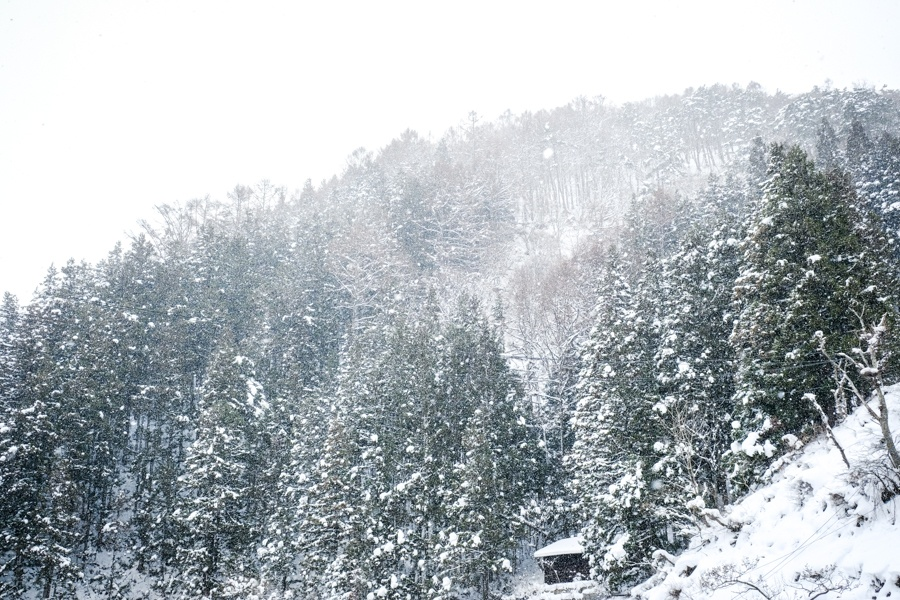 Snowy pine trees in Nagano Japan