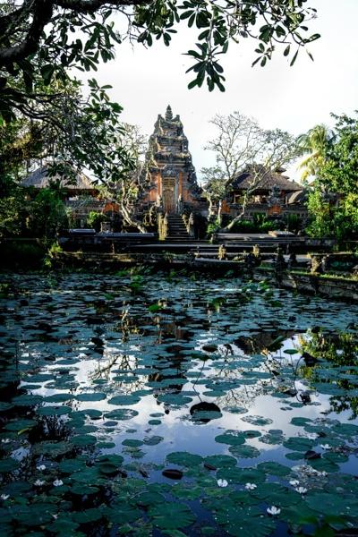 Lotus pond at Pura Saraswati Temple in Ubud Bali