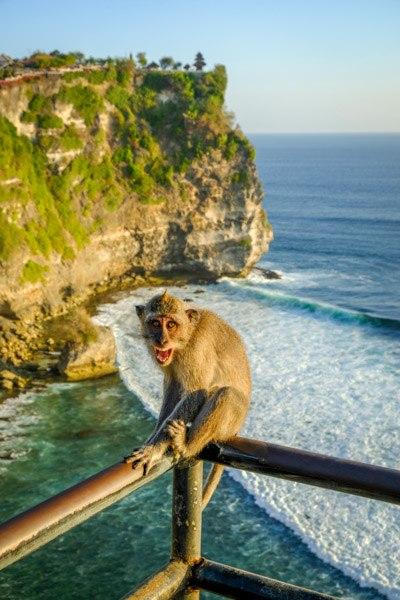 Uluwatu cliff monkey