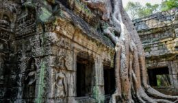 Tree root at the Ta Prohm Temple Ruins in Angkor Wat, Cambodia