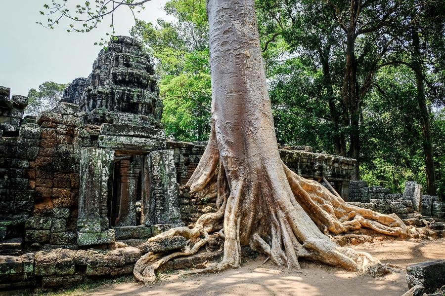 Banteay Kdei tree roots