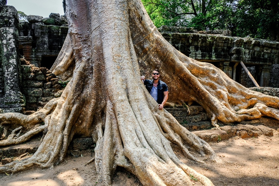 Giant tree root in Cambodia