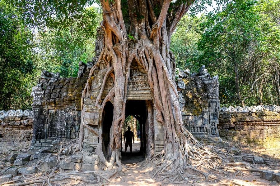 Ta Som tree door at the Angkor Wat in Cambodia