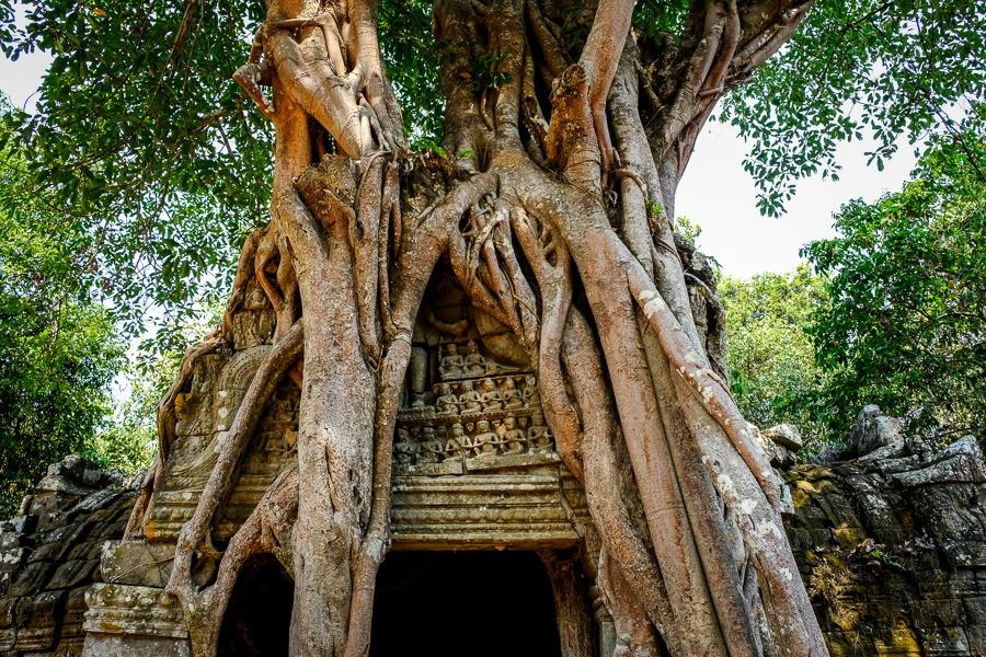 Ta Som tree doorway