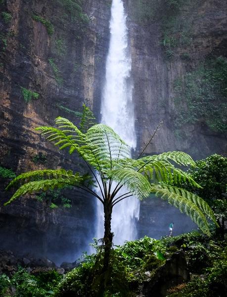 Giant fern and Kapas Biru Waterfall in East Java Indonesia