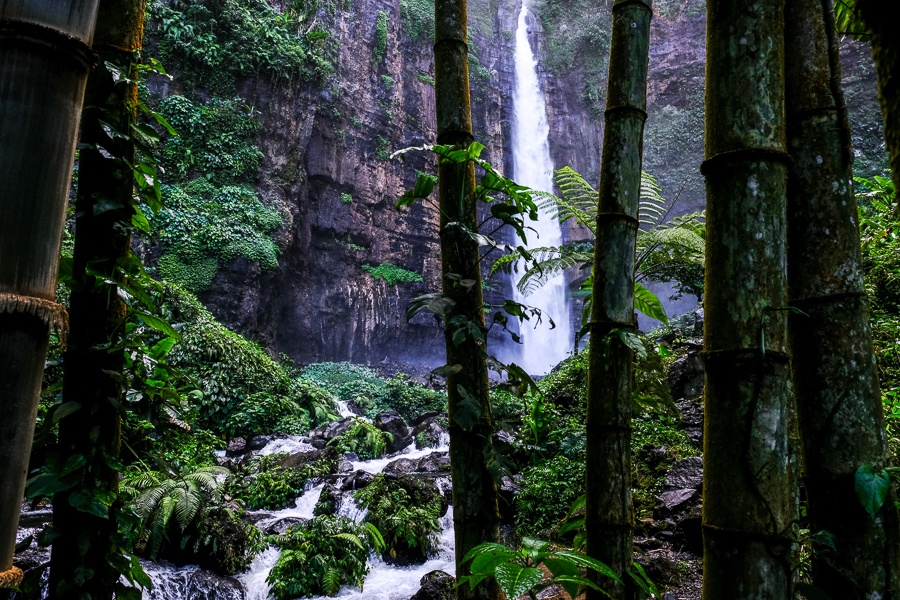 Bamboo trees at Kapas Biru Waterfall in East Java Indonesia