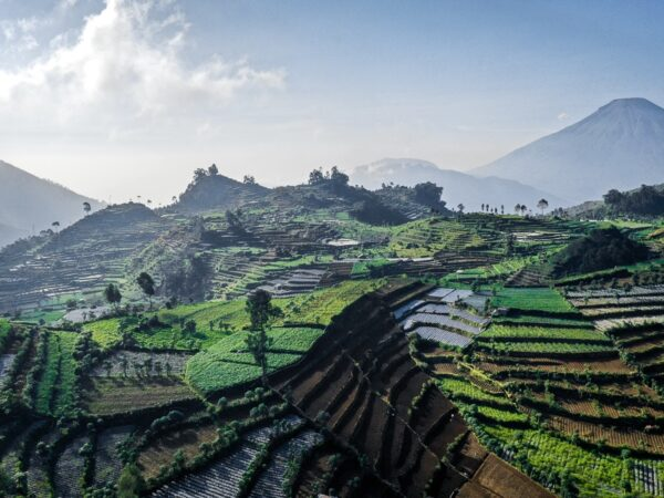 Drone view of crop terraces at Dieng Plateau Indonesia