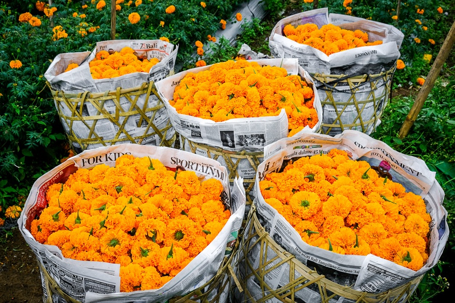 Marigold flower baskets in Bali
