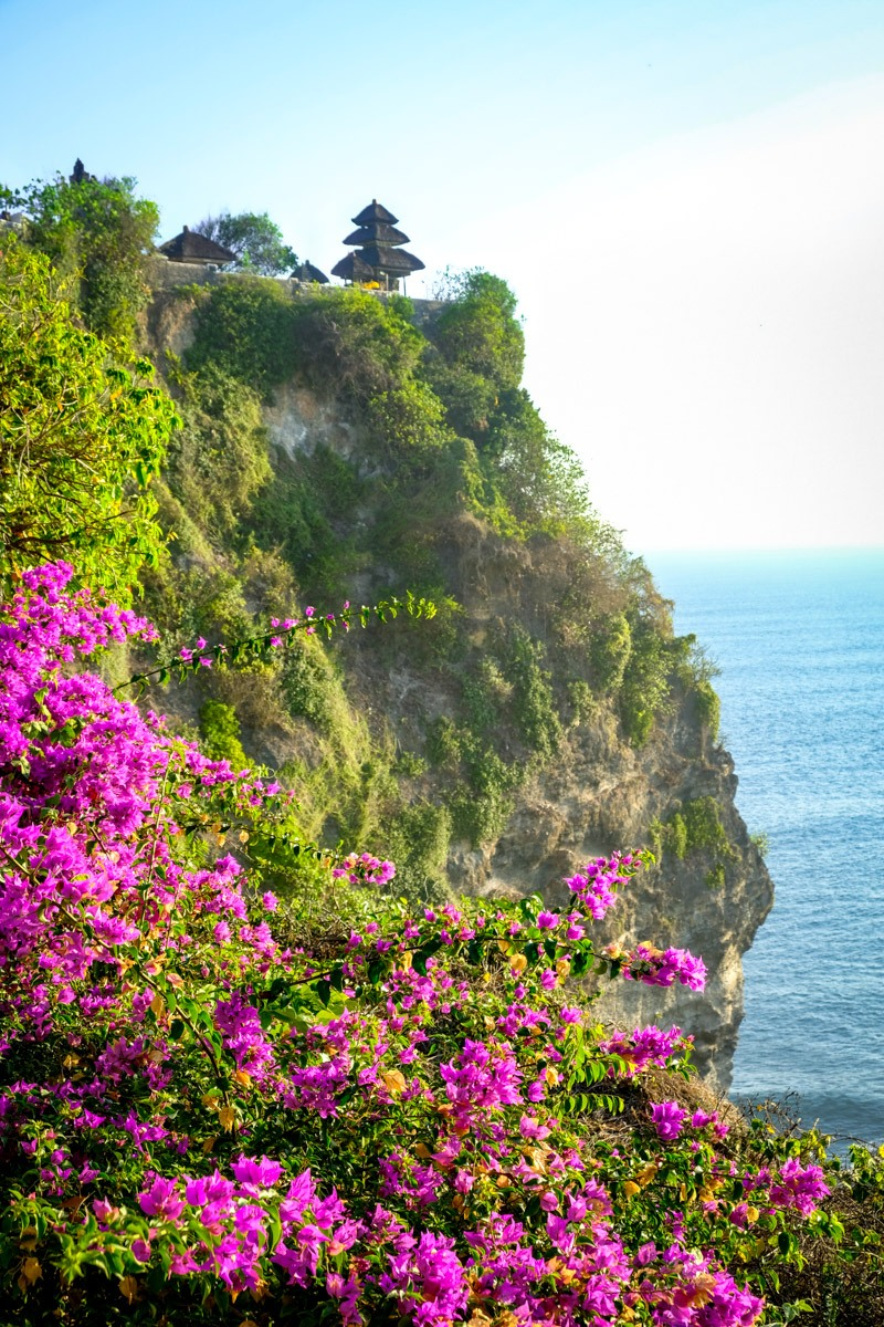 Cliffs and purple flowers at Uluwatu Temple in south Bali