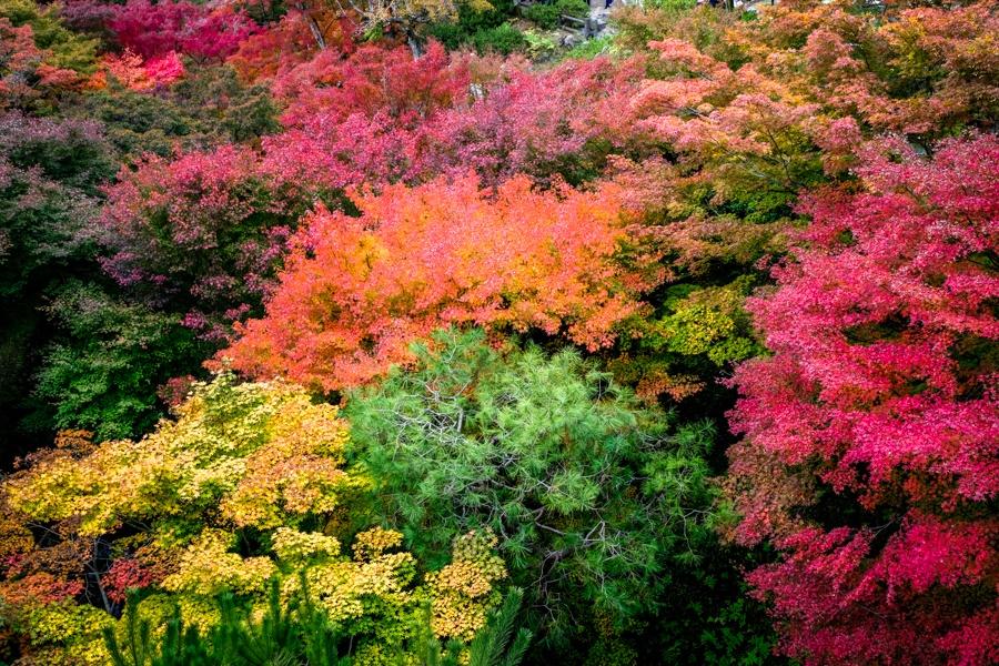Japan fall colors