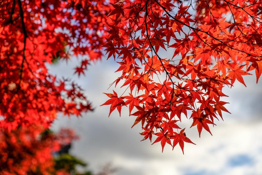 Fall colors Japan
