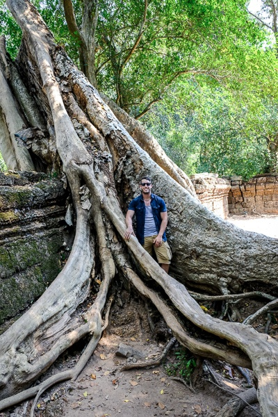 Giant tree root at the Angkor Wat temple in Cambodia