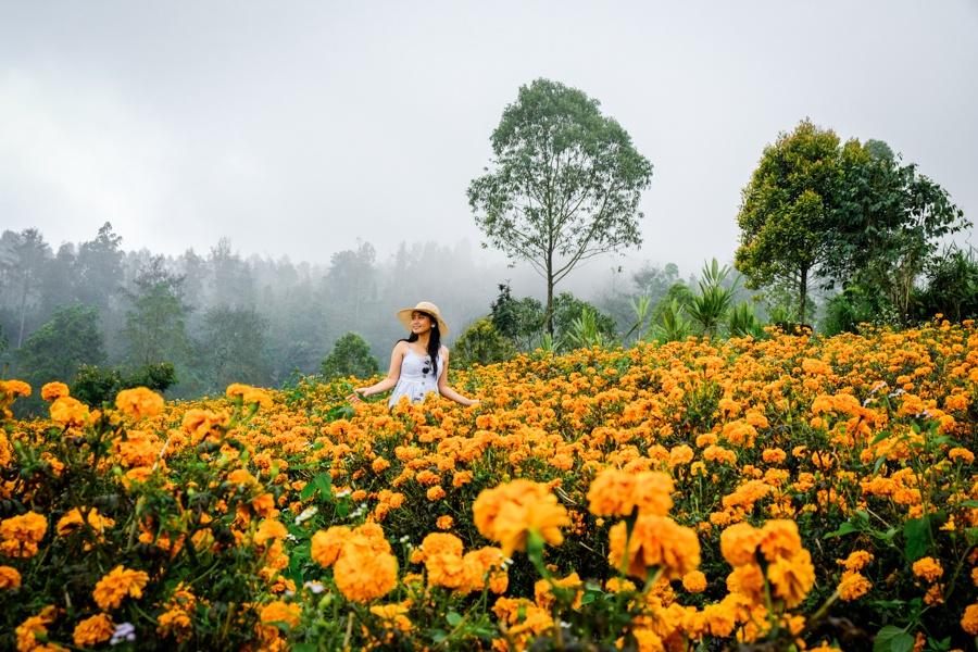 My woman in the Bali marigold fields