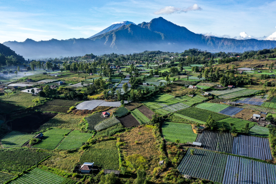 Kintamani Bali village and crop fields drone picture