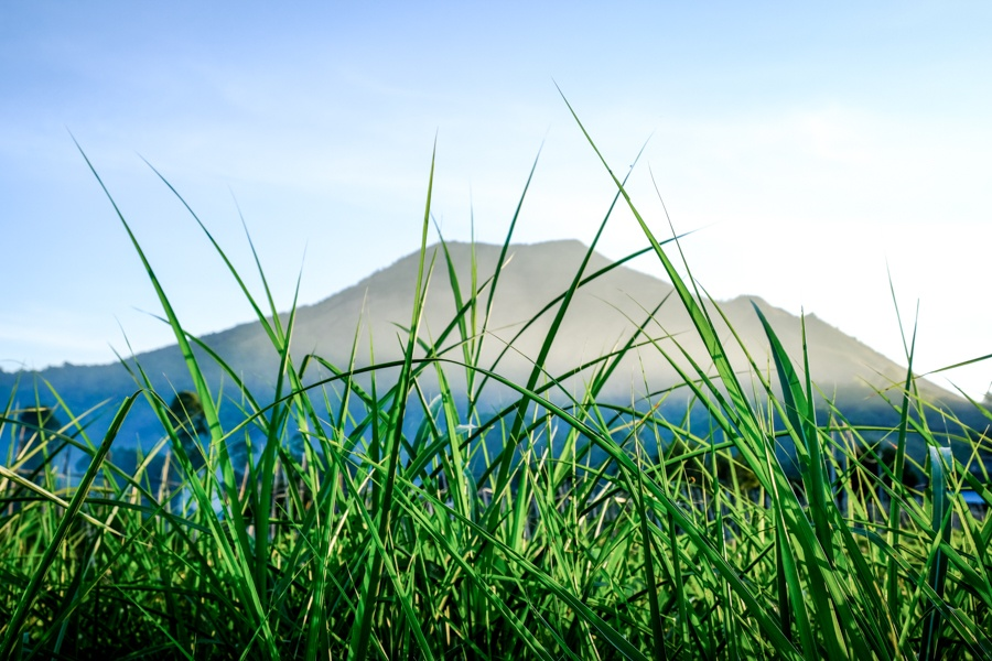 Gunung Batur silhouette in the grass