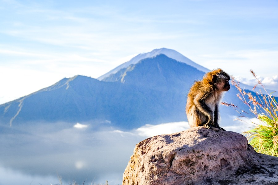 Monkey on Mount Batur