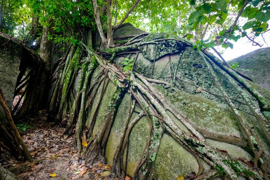 Trees and boulders at Tanjung Tinggi