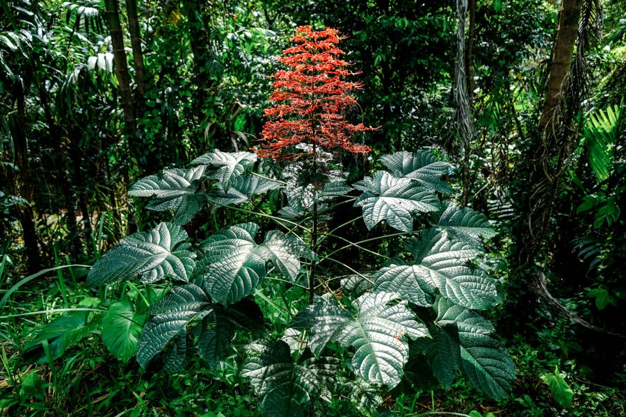 Tropical plants at Suwat in Bali
