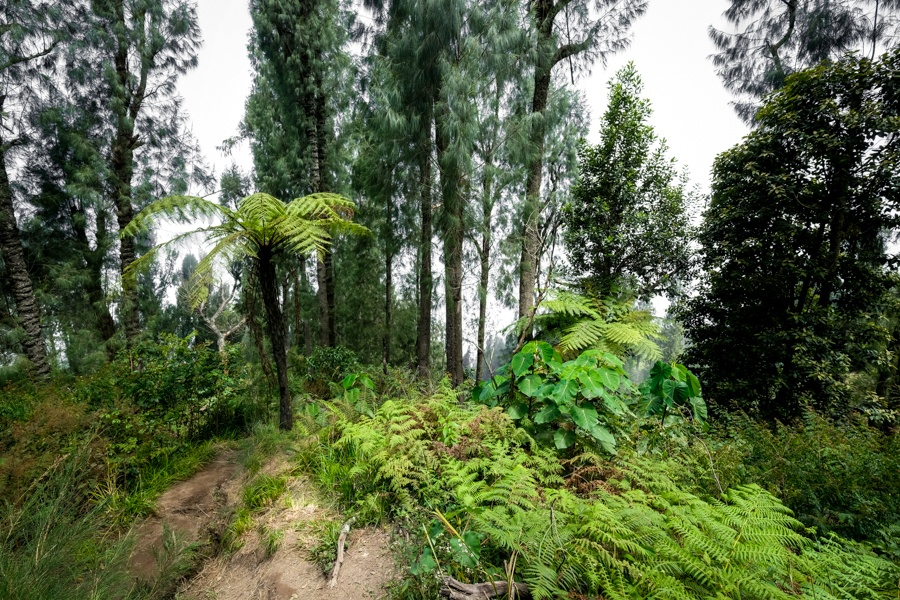 Jungle and forest on the Mount Agung hike in Bali
