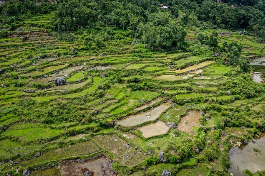 Rice terraces at Mount Sesean