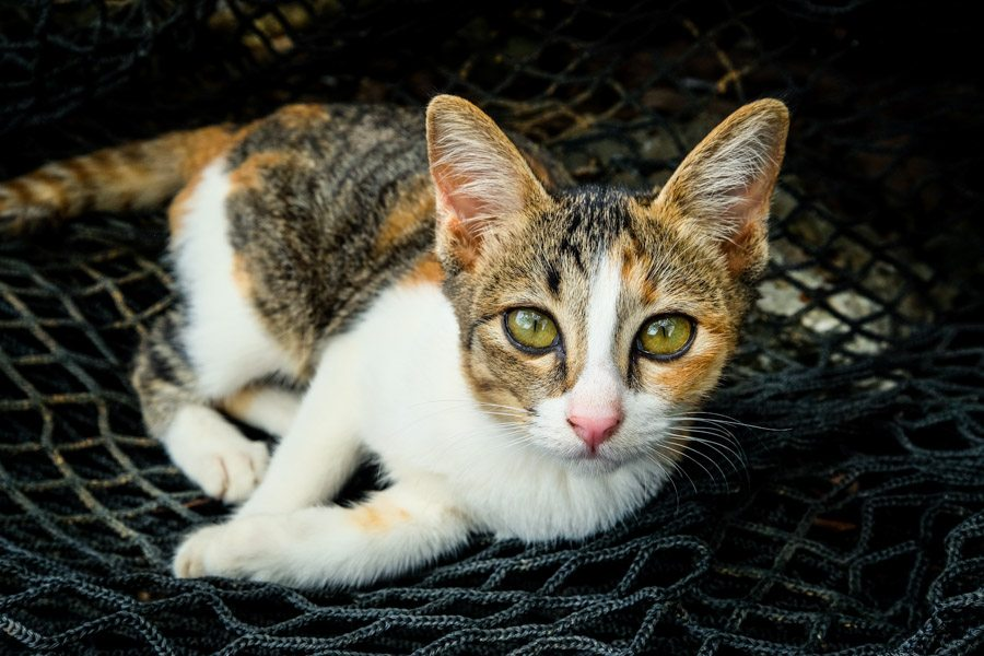 Cat at grandma's house fishing village in Sulawesi