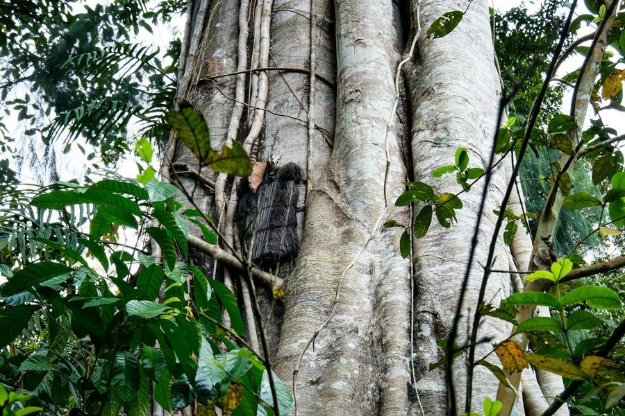 Baby grave tree in Bori Kalimbuang