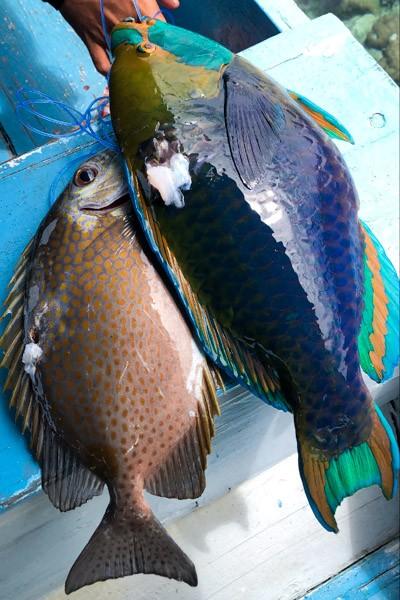 Fish caught in Sulawesi