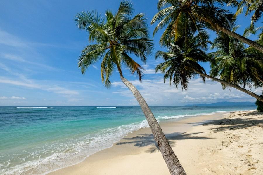 Bent Palm Tree Over Beautiful Sumatra Indonesia Island Beach