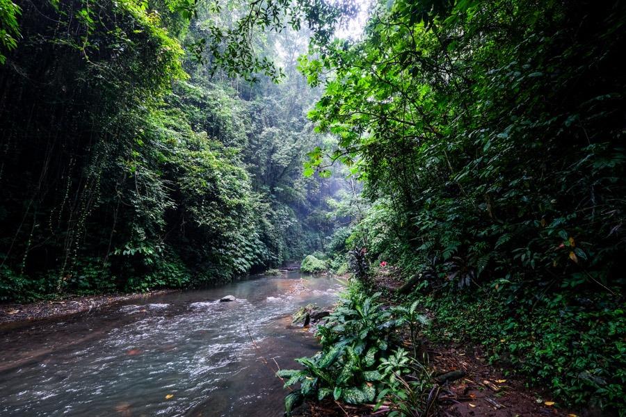 Jungle stream at Colek Pamor