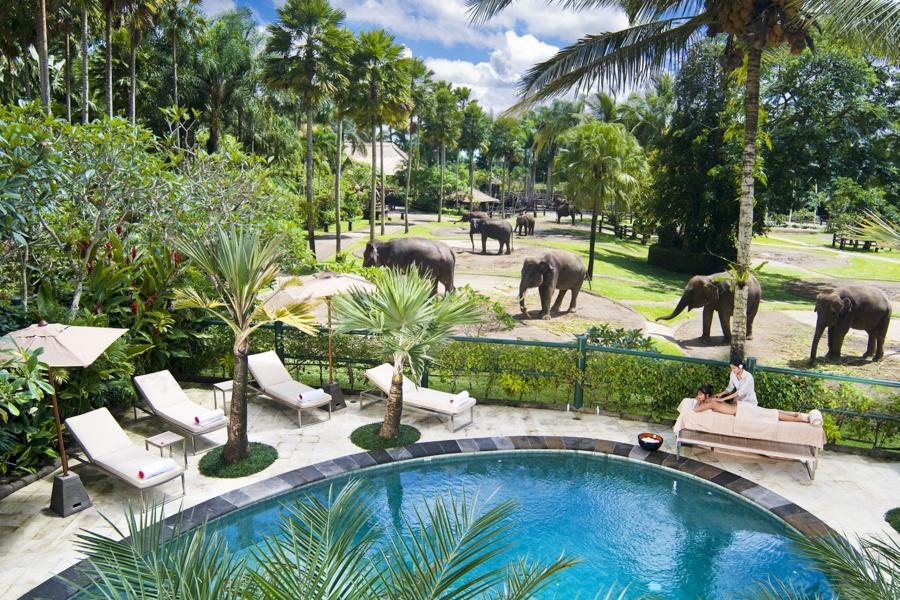 Mason Elephant Lodge Pool