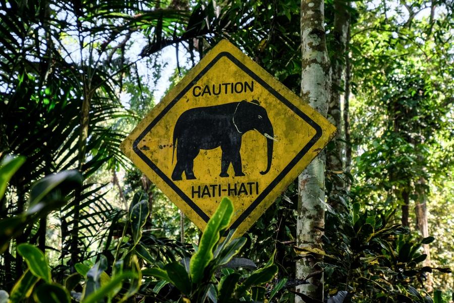 Elephant sign crossing