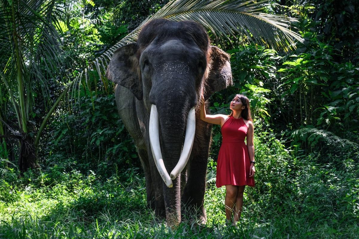elephant sanctuary bali elephant bali mason elephant park ubud