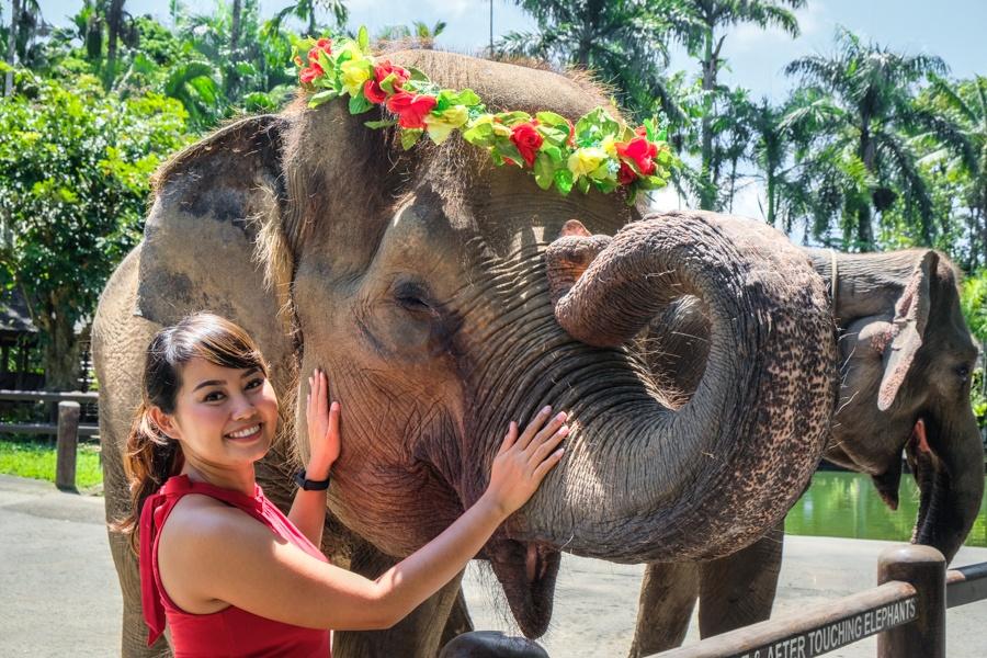 Elephant interaction ubud