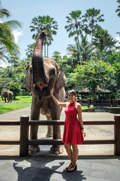 elephant sanctuary bali elephant bali mason elephant park