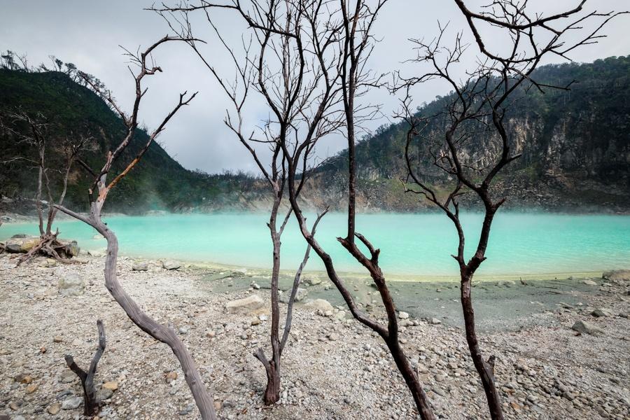 Dead Trees Lake