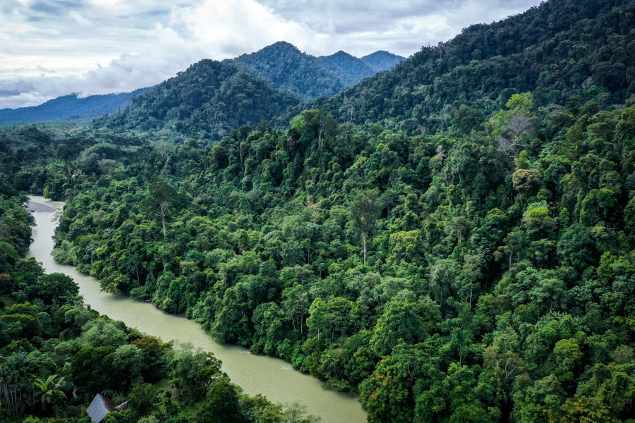 Drone Tangkahan Elephant Sanctuary North Sumatra Indonesia